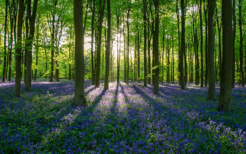 Forests at risk in Great Britain