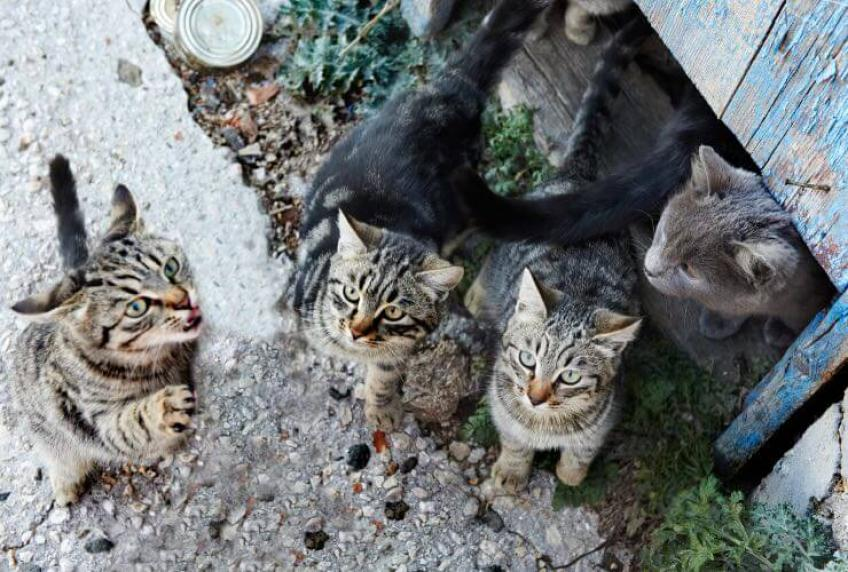 Colony of stray cats killed and thrown in a dumpster