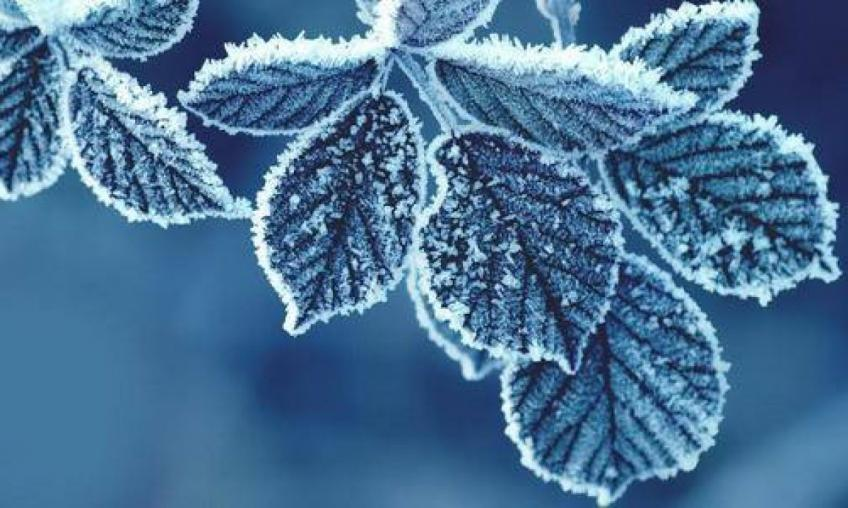 Frosty April 2021 due to the climate crisis