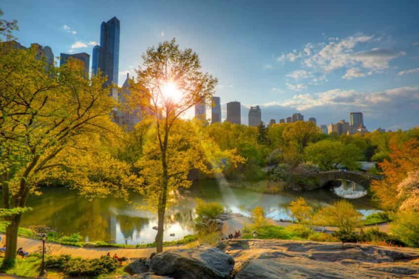 Urban forests against Climate Crisis and pollution